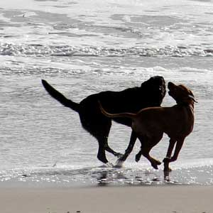 Its Beach wins the readers' vote for Best Dog Park. Photo by Chip Scheuer.