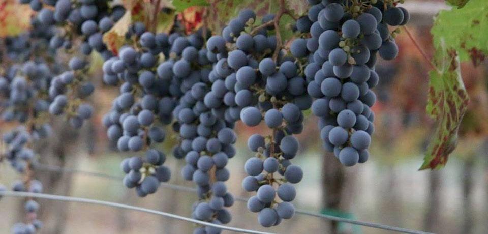 seattle-wineries-tasting-rooms