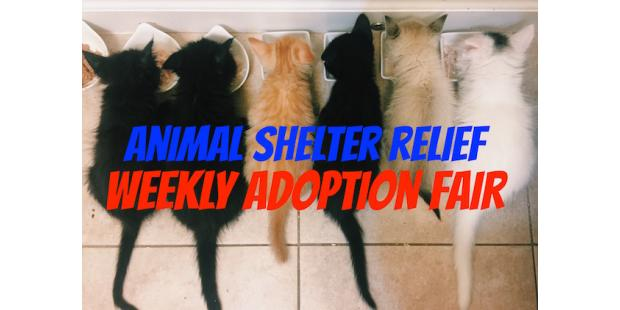 Animal Shelter Relief Rescue Adoption Fair!