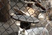 Big Bear Alpine Zoo logo