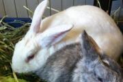 Bunny World Foundation logo
