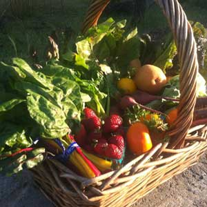 A look-see at the range of produce in a Serendipity Farm CSA delivery. Photo by Jamie Collins.