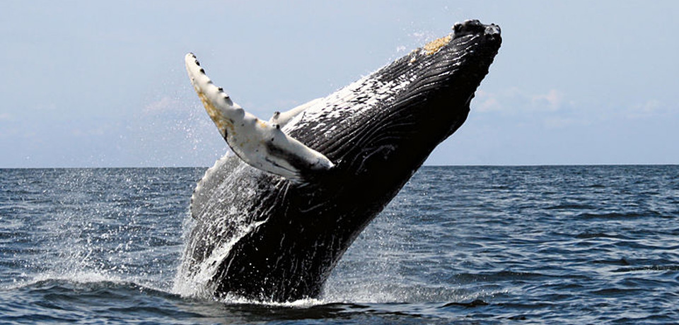 santa-cruz-whale-watching-g