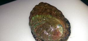American Abalone Farms